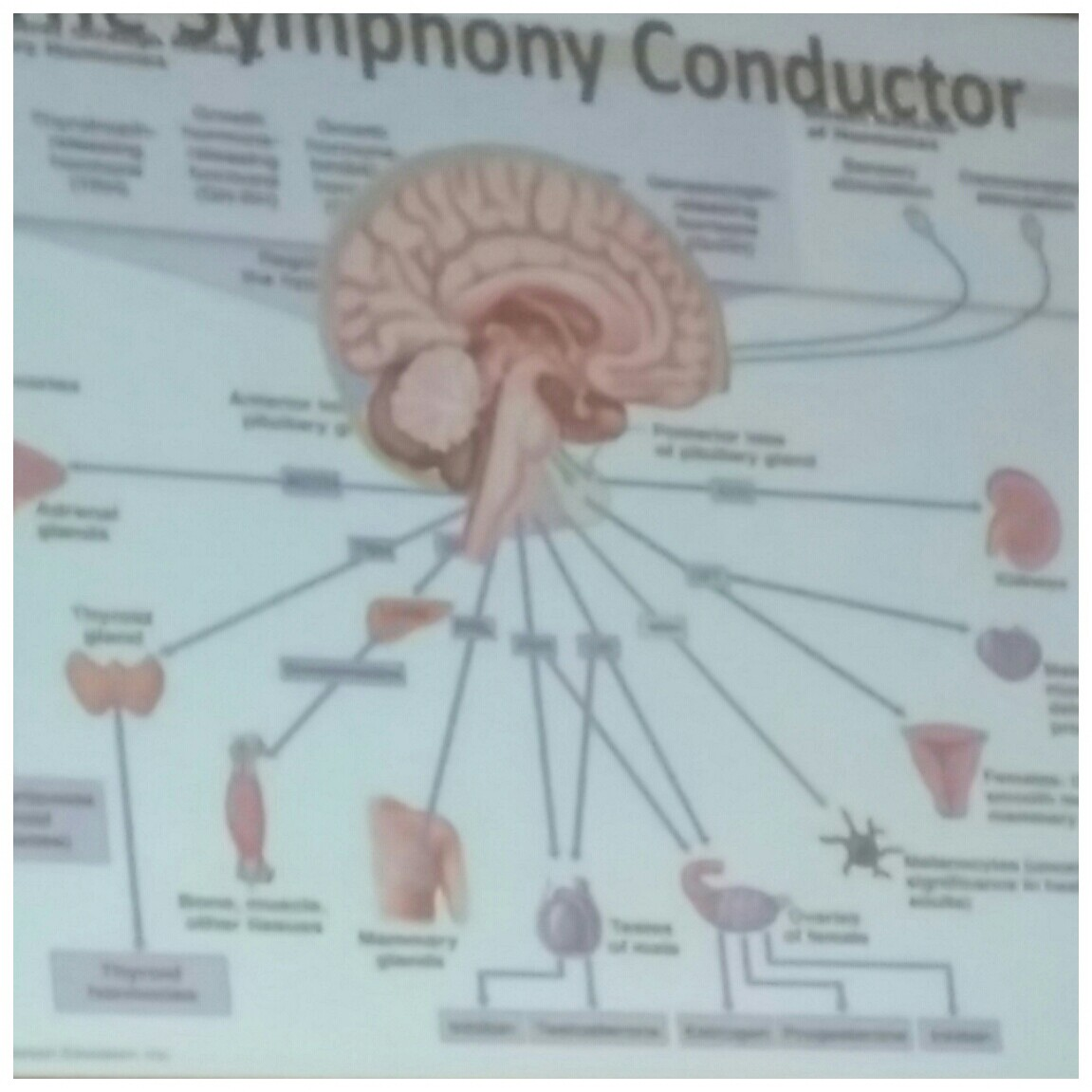 BrainIsSymphonyConductor!